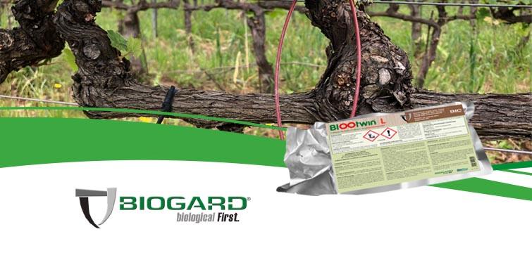 Biogard - BIOOtwin® L, il nuovo diffusore biodegradabile per la confusione sessuale della tignoletta della vite Lobesia botrana