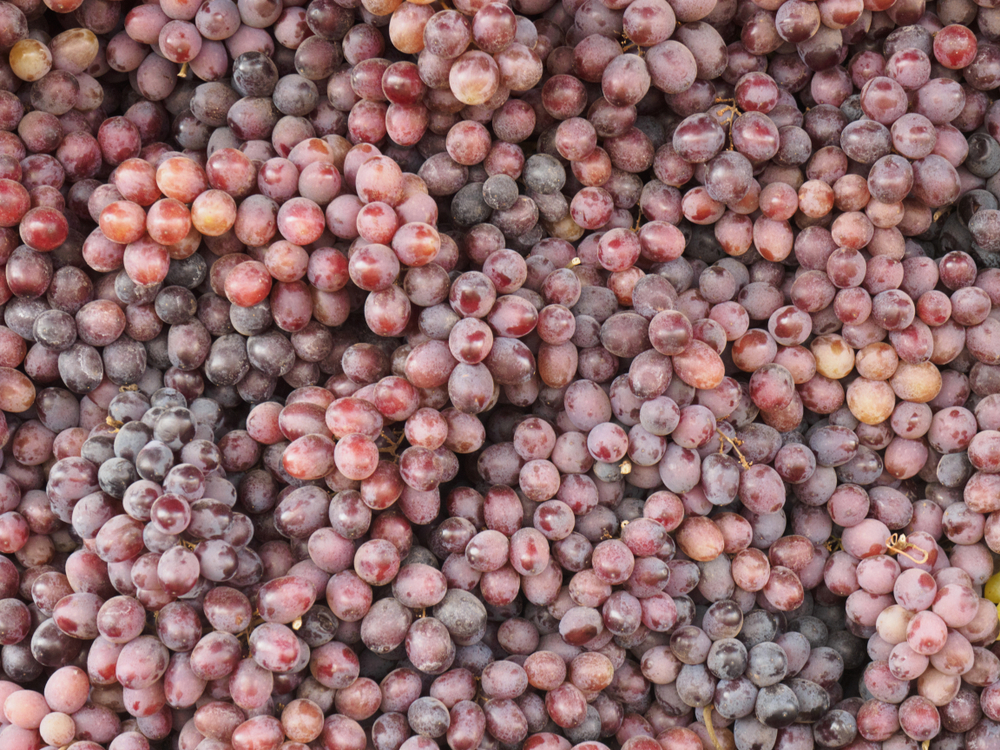 Biogard - Linea Biogard®  per controllo cocciniglie su vite da vino.