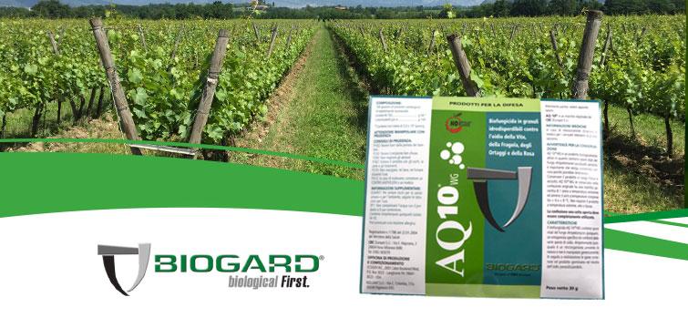 Biogard - AQ10® contro l'oidio su vite