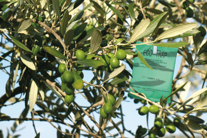 eco-trap-1
