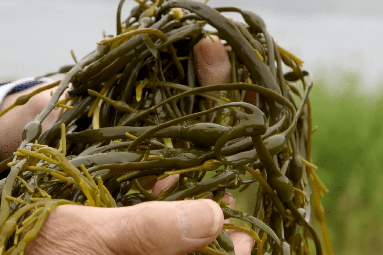 lysodin-alga-fert