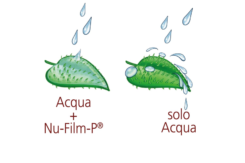 nu-film-p-1