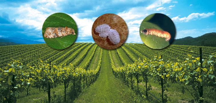 Biogard - Linea Biogard® contro i fitofagi della vite.